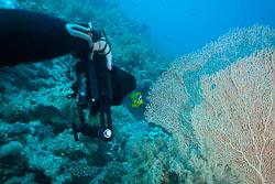 BD-150226-Gubal-Strait-7086-Homo-sapiens.-Linnaeus.-1758-[Diver].jpg